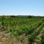 wwoof in spagna