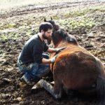 aiutare i cavalli