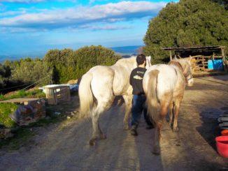 italian horse protection center, ihp, rifugio cavalli, santuario,