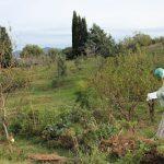 permacultura e downshifting in sardegna