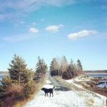 viaggio lento in Canada