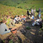 raccolta dell'uva, Francia, vendemmia
