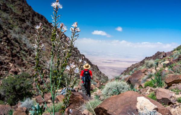 In cammino da Dana a Petra