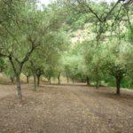 permacultura e libertà