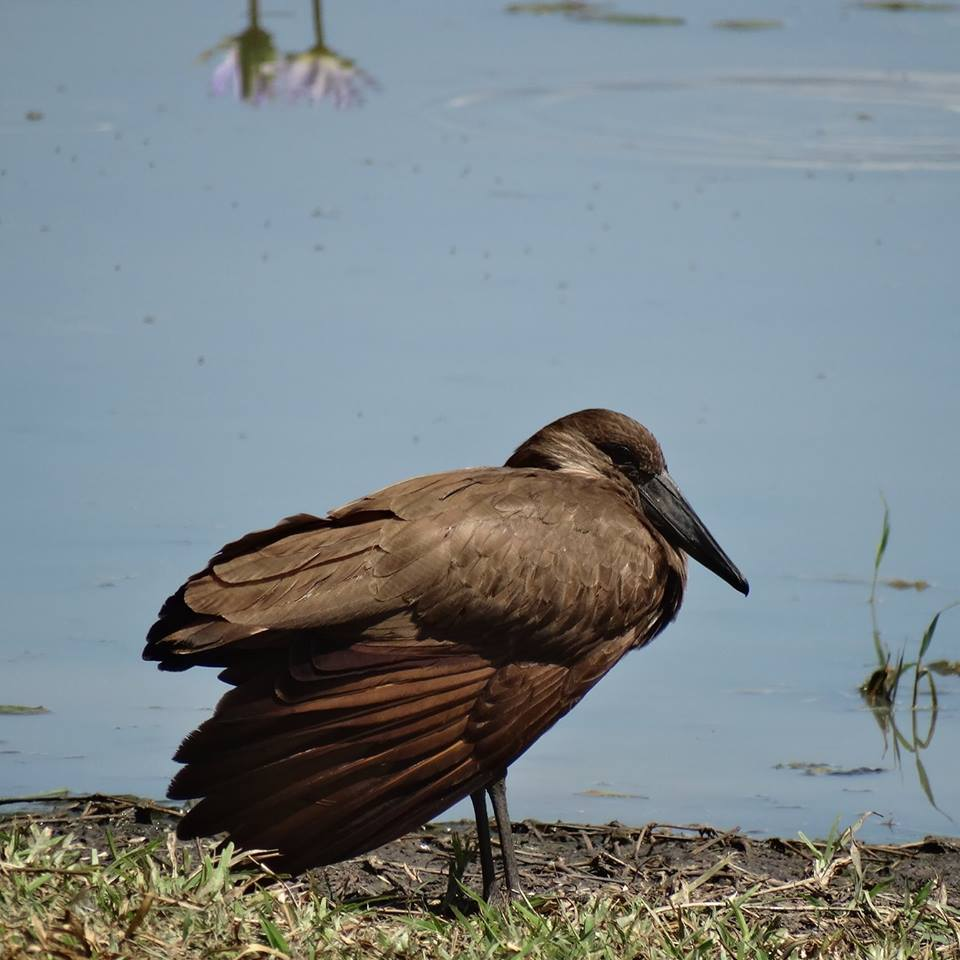 Una riserva di fauna selvatica nel Malawi