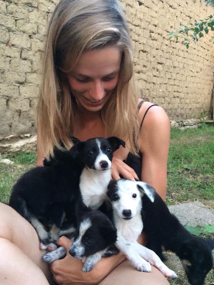 Rifugio per cani a nord della Bulgaria cerca volontari viaggiatori
