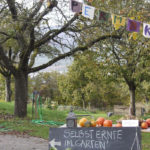servizio volontario europeo in ecovillaggio
