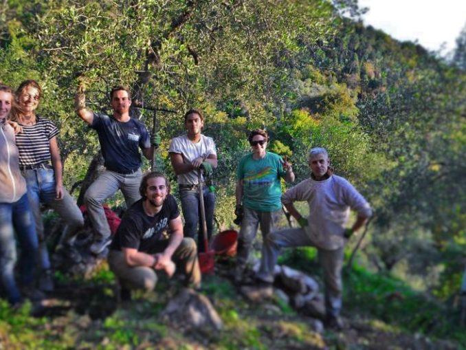 Home viaggiare con lentezza for Raccolta olive periodo