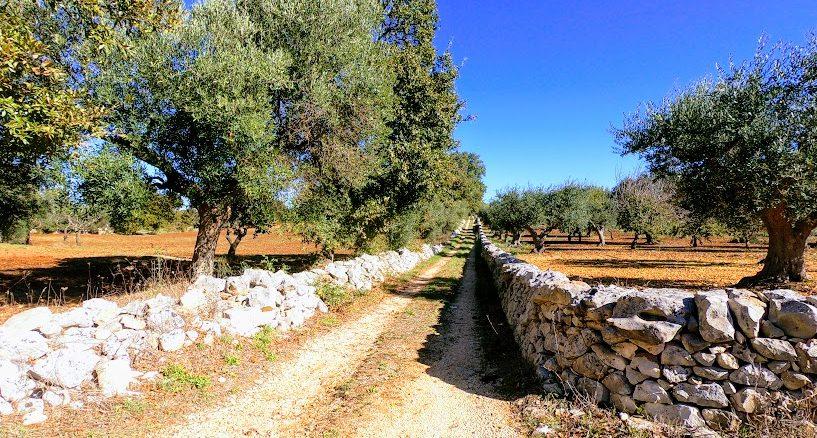 Pedalare in Puglia