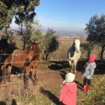 wwoof, wwoofing, wwoof Italia, scambio di ospitalita, scambio culturale, lavoro in fattoria