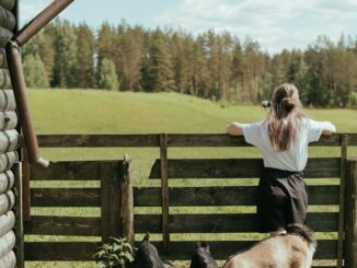 wwoof, fattoria biologica, volontaria, volontariato, progetti di volontariato, natura, vita di campagna, ragazza, animali, autosufficienza