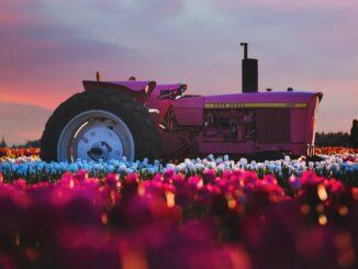trattore, campagna, colori, festival, eventi, lentezza, slow, viaggiare con lentezza, hippie, concerti, novirà, rosa, natura