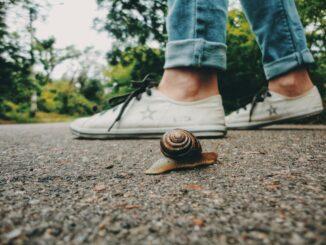 slowness, slow travel, viaggiare con lentezza, lumaca, vivere con lentezza, tartaruga, camminare, consigli