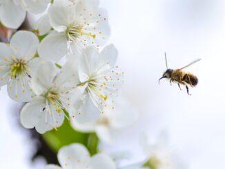 api, ape, alveare, agricoltura sostenibile, wwoof, iniziativa, px, pex, pixa, apicoltura sostenibile