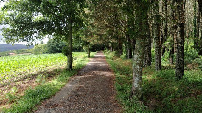 percorso, bosco, sentiero, Michele Bosio, tramonto, cammino, mollare tutto, viaggiare, slow travel, viaggiare con lentezza
